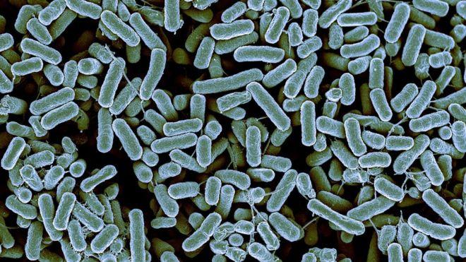 Antibiotici: scoperto batterio resistente ad ogni cura. È allarme