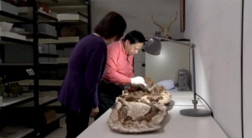 Taiwan: scoperto fossile di donna con bambino in braccio
