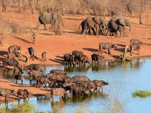 Siccità in Zimbabwe: in vendita gli animali dei parchi naturali