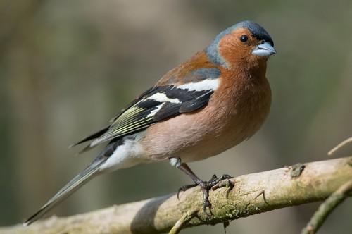 Caccia: 25 milioni di uccelli uccisi nei paesi del Mediterraneo