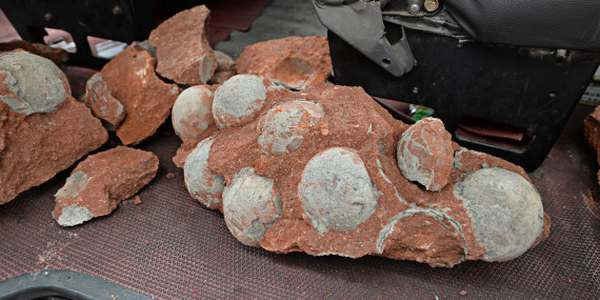 Uova di dinosauro affiorano dal sottosuolo: incredibile ritrovamento in Cina