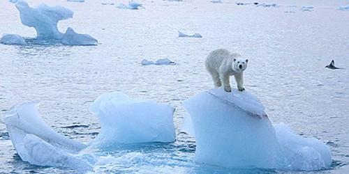 Scioglimento ghiacci: il Polo Nord potrebbe scomparire nel 2017