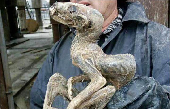 Siberia: uno strano animale nella profonda miniera di Udačnyj