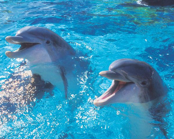La comunicazione dei delfini è incredibilmente simile alla nostra