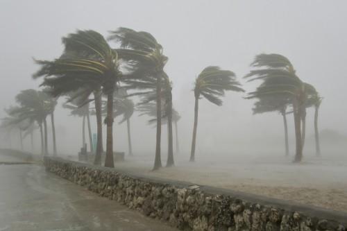 Palme: come resistono ai venti degli uragani?