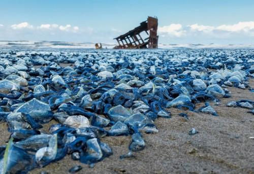 Blob, l'improvvisa ondata di acqua calda che uccide gli animali in Alaska