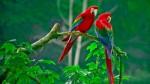 Animali: estinzione di massa più grande dal Cretaceo, l'allarme di WWF