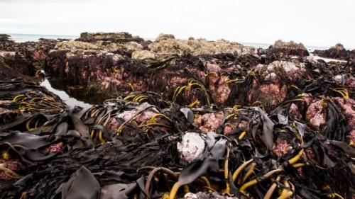 Nuova Zelanda: fondale marino innalzato di 2 metri dopo il terremoto