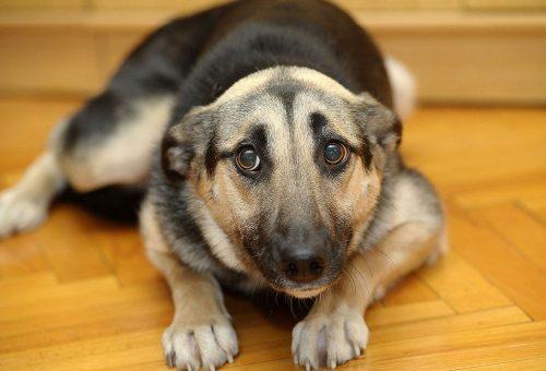 Capodanno: il cane ha paura? Ecco come proteggerlo