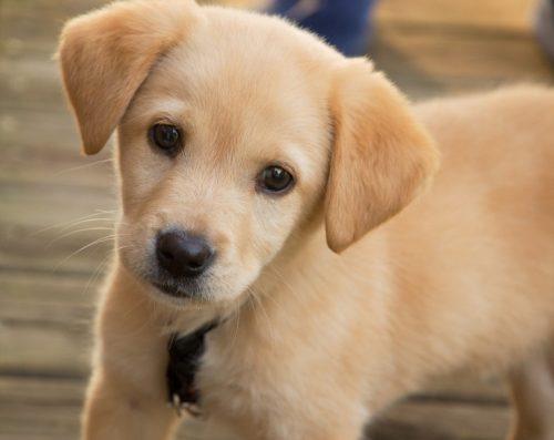 I cani provano sentimenti?