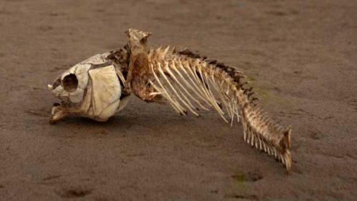 Oceano Indiano: scoperta una vasta 'zona morta' nel Golfo del Bengala