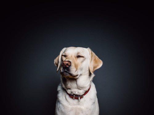 Animali: i cani preferiscono la musica reggae, la ricerca