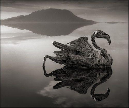 Animali pietrificati: l'incredibile fenomeno del Lago Natron