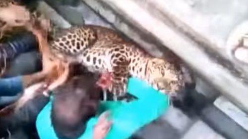 Leopardo per le strade della città: 20 persone aggredite, il video