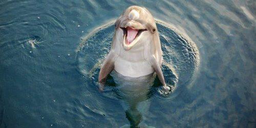 Delfino nel fiume Arno: l'incredibile avvistamento a Pisa