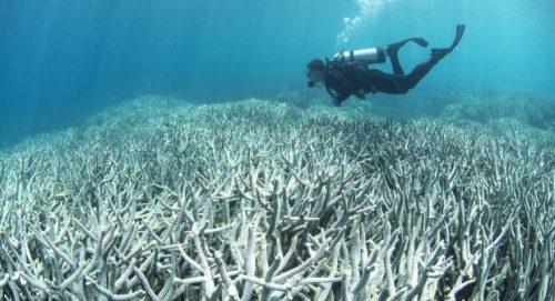 Natura: la barriera corallina australiana dichiarata morta