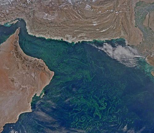 Natura: il fitoplancton invade il Mare Arabico, è allarme