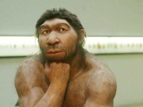 Aspirina e antibiotici: i Neanderthal ne conoscevano gli effetti