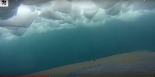 Agganciano una telecamera su una balena: video spettacolare