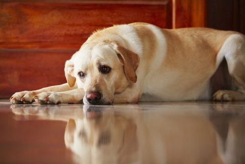 Lasciare il cane da solo: ecco le conseguenze per l'animale