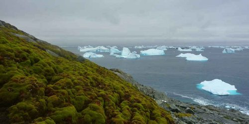 Clima: l'Antartide è sempre più verde, aumenta il muschio