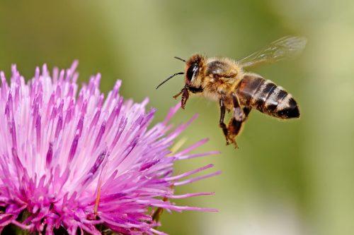 Come comportarsi in caso di puntura di ape, vespe o calabroni