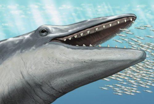 La balena più antica mai scoperta: viveva 36 milioni di anni fa