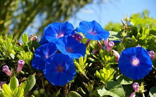 Campanule su Marte: ecco come i fiori potrebbero sopravvivere alle radiazioni