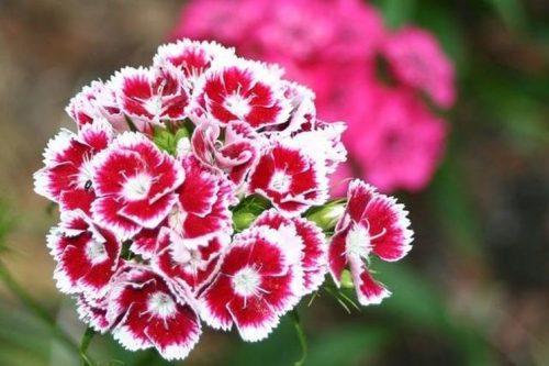 Fiori commestibili: ecco le piante che è possibile mangiare