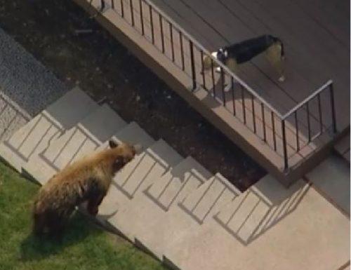 orso bruno nel giardino di una casa