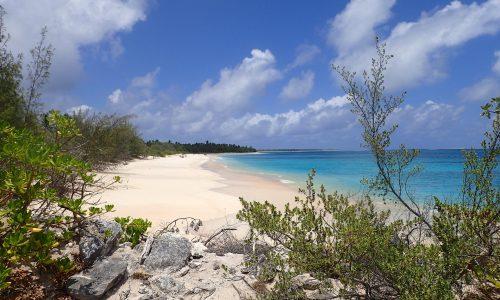 Natura: torna la vita sull'atollo di Bikini