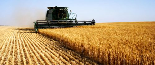 Sostenibilità ambientale: dieta onnivora, vegetariana e vegana a confronto