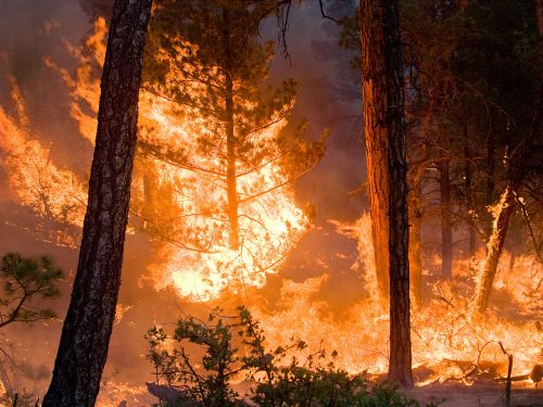 Vasto incendio in Valle Imagna, bruciati molti ettari di bosco