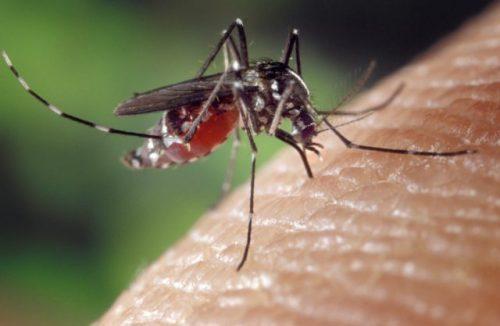 Zanzara tigre, è invasione: allarme in diverse città