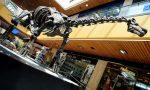 Patagotitan mayorum: il dinosauro più grande mai scoperto