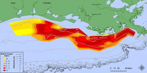 """Usa: la """"Zona Morta"""" nel Golfo del Messico è fuori controllo"""