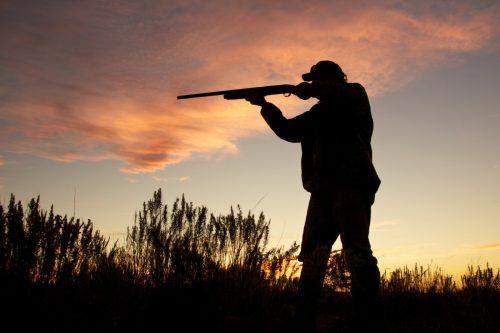 Incendi e siccità hanno ucciso milioni di animali, l'appello degli ambientalisti contro la caccia