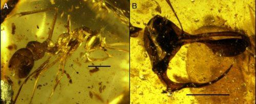Formica vampiro, l'antico insetto con fauci e corno che si nutriva di sangue