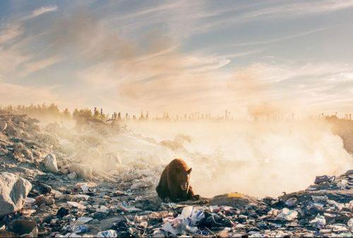 Orso circondato dai rifiuti, lo scatto struggente che ha fatto piangere il fotografo