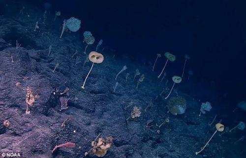 L'incredibile scenario della 'Foresta delle Assurdità', il fondale di spugne in un atollo contaminato
