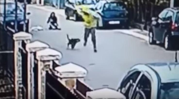 Cane randagio interviene per difendere una donna da una rapina