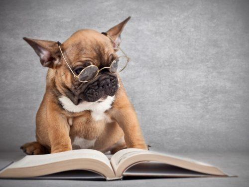 I cani battono i gatti per numero di neuroni, la ricerca