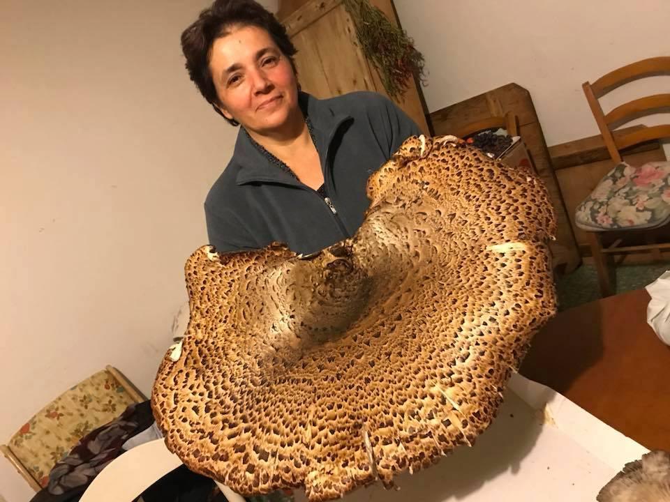 Fungo gigante raccolto in provincia di Salerno: è record