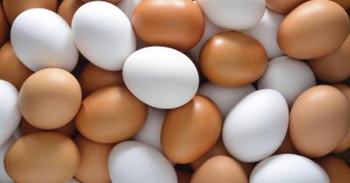 Crollo della produzione di uova: a rischio i panettoni e dolci di Natale