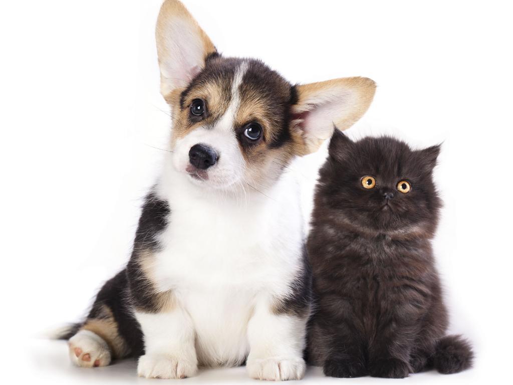 Cani e neuroni, ne hanno il doppio dei gatti