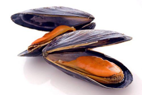 Plastica nelle cozze: contaminati anche i molluschi dell'Artico