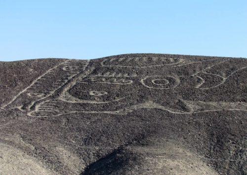 Archeologia: riportato alla luce disegno con gigantesca orca
