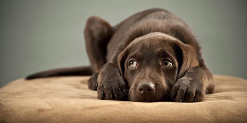 Capodanno: 56 cani uccisi dai botti, tremila scappati di casa