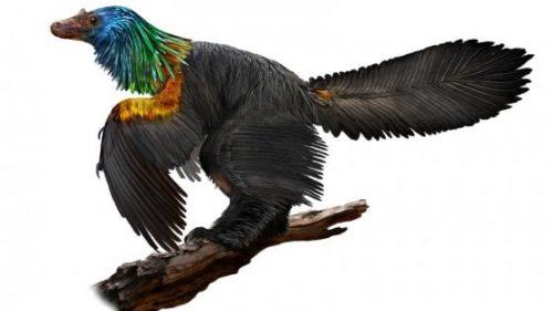 Dinosauro arcobaleno, il coloratissimo rettile scoperto in Cina