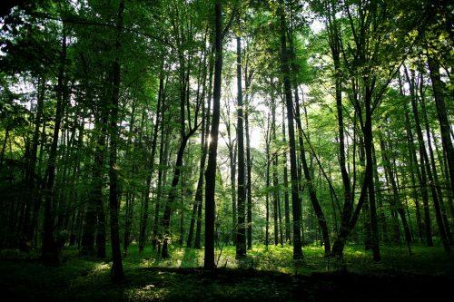 Ambiente: la Cina ha piantato 338mila chilometri di foreste